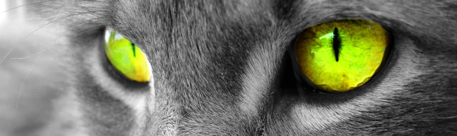 Kattenhotel De Muizenvangers